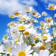 Spring Flowers Wallpapers 8